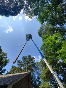 Ridge Tree Trimming Service