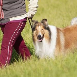 Four Paws Dog Retreat