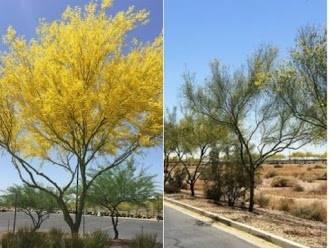 Arborist Consultation and Diagnosis, Deep Root Feeding