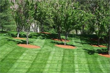 Minnetonka Lawn Care & Landscaping Service Pros