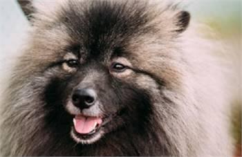 Utah Mobile Dog Grooming