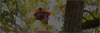 PCTrees Services - Tree Removal Melbourne