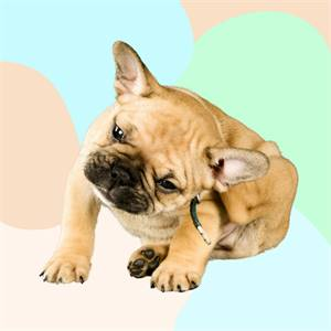 Best Dog Food for Dry Skin and Coat